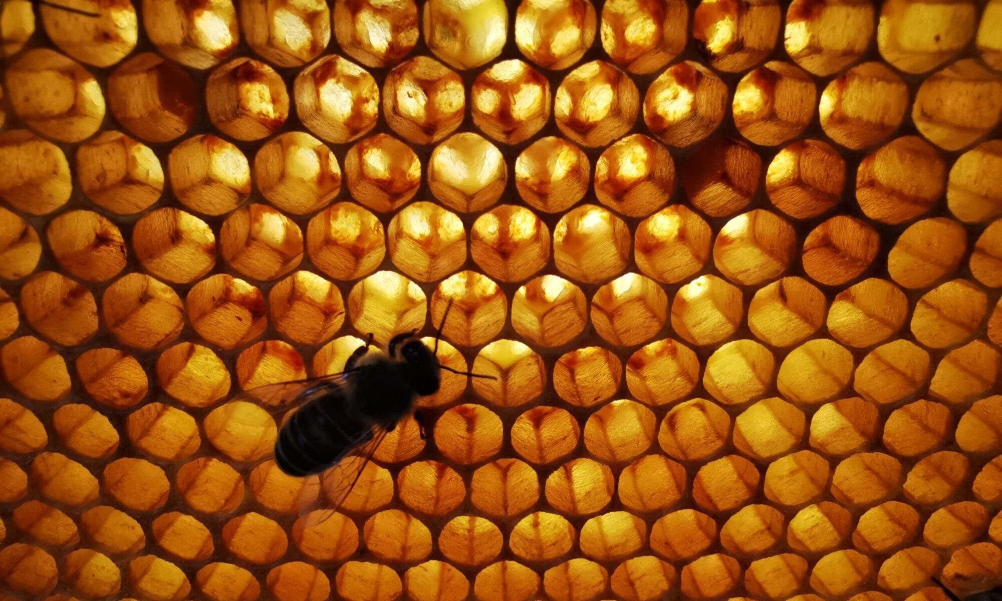Obrotka méhészet